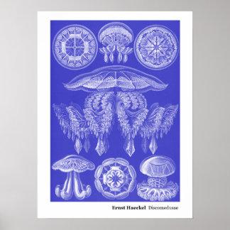 Ernst Haeckel Discomedusae III Poster