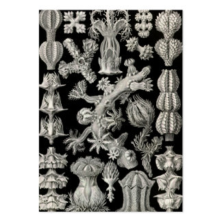 Ernst Haeckel Gorgonia Pack Of Chubby Business Cards