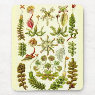 Ernst Haeckel - Hepaticae Mouse Mat