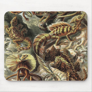 Ernst Haeckel - Lacertilia Lizards Detail Mouse Mat