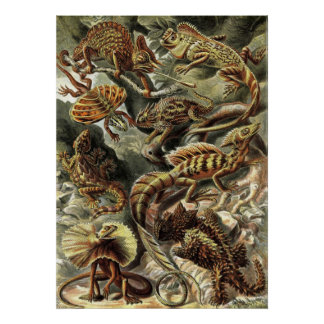 Ernst Haeckel - Lacertilia Lizards Poster