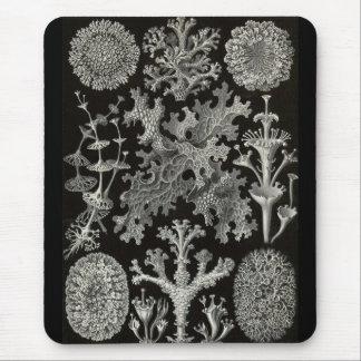 Ernst Haeckel - Lichenes Mouse Mat