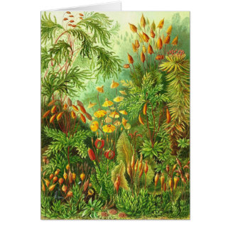 Ernst Haeckel - Muscinae Greeting Card