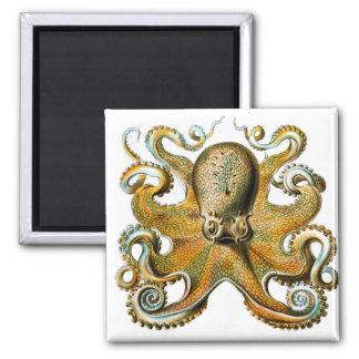 ernst haeckel octopus magnet