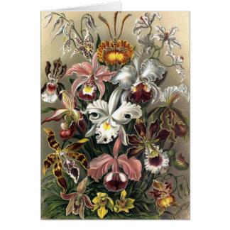 Ernst Haeckel - Orchideae Card