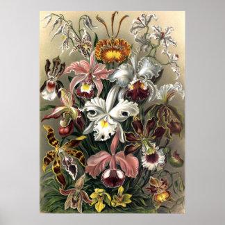Ernst Haeckel - Orchideae Poster