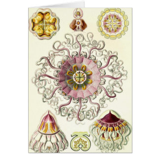 Ernst Haeckel - Peromedusae Card