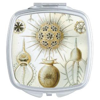 Ernst Haeckel Phaeodaria Compact mirror