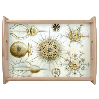 Ernst Haeckel Phaeodaria Serving Tray