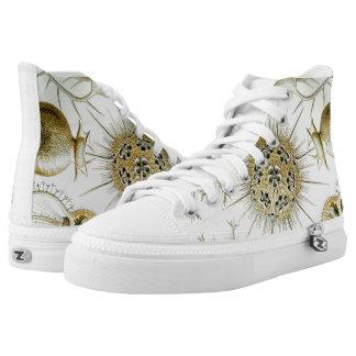 Ernst Haeckel Phaeodaria Shoes