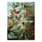 Ernst Haeckel Poster ~ Hummingbirds