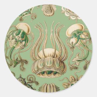 Ernst Haeckel's Narcomedusae Round Sticker