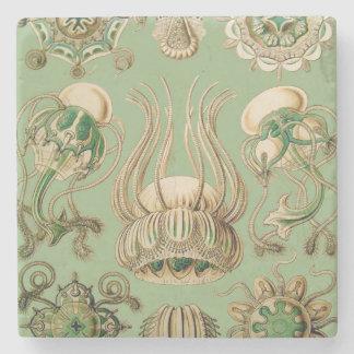 Ernst Haeckel's Narcomedusae Stone Coaster