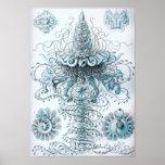 Ernst Haeckel Siphonophorae Jellyfish Bluebottle Poster