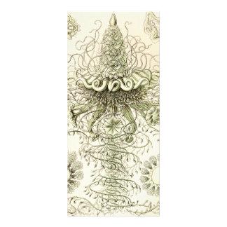 Ernst Haeckel Siphonophorae Rack Card Design