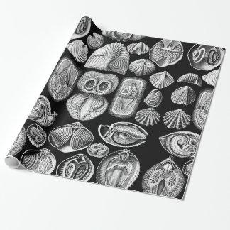Ernst Haeckel Spirobranchia Wrapping Paper