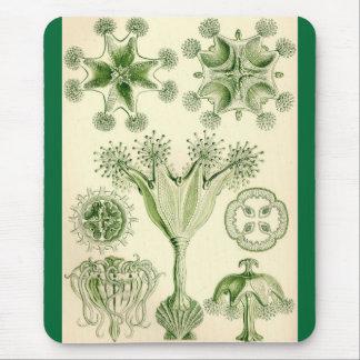 Ernst Haeckel - Stauromedusae Jellyfish Mouse Mat