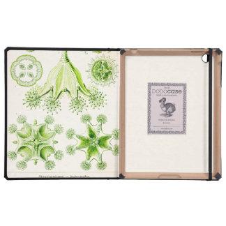 Ernst Haeckel Stauromedusae Stalked Jellyfishes iPad Covers