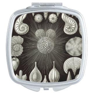 Ernst Haeckel Thalamphora Shells Mirror Vanity Mirrors