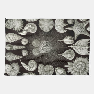 Ernst Haeckel Thalamphora Shells Tea Towel