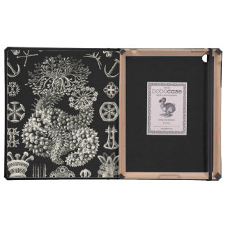 Ernst Haeckel Thuroidea Sea Cucumbers iPad Folio Cover