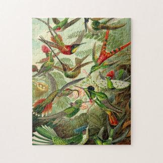 Ernst Haeckel Trochilidae Hummingbird Puzzle