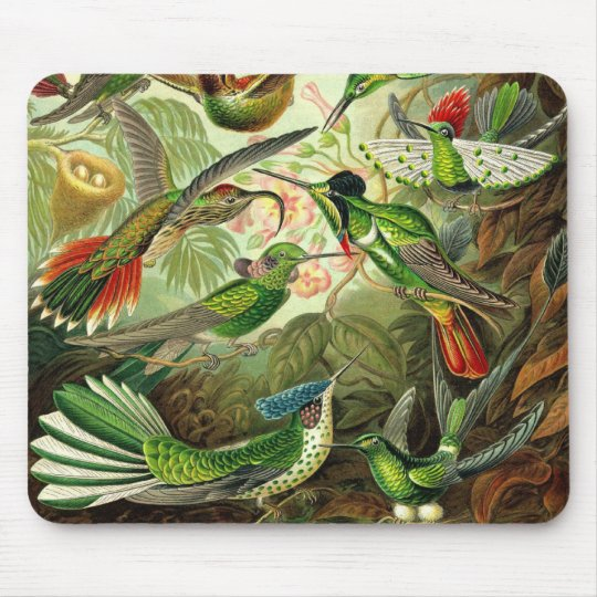 Ernst Haeckel - Trochilidae Hummingbirds Detail2 Mouse Mat