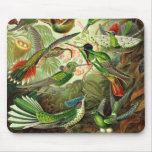 Ernst Haeckel - Trochilidae Hummingbirds Detail2 Mouse Pad
