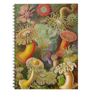 Ernst Haeckel's Actinae Ocean Life Spiral Notebook