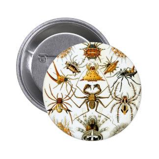 Ernst Haeckel's Arachnida Spiders 6 Cm Round Badge