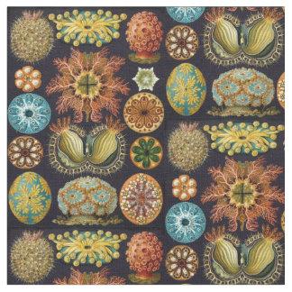 Ernst Haeckel's Ascidiae Ocean Life Fabric