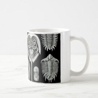 Ernst Haeckel's Aspidonia Coffee Mugs