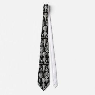 Ernst Haeckel's Aspidonia Tie