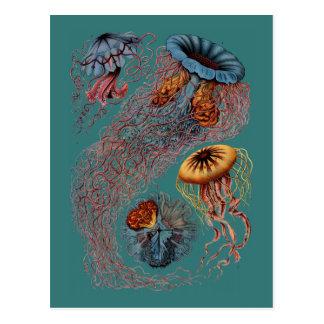 Ernst Haeckel's Disco Medusae Postcard
