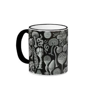 Ernst Haeckel's Mycetozoa Ringer Mug