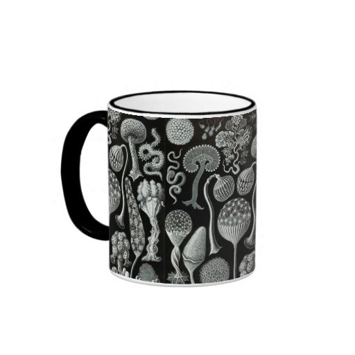 Ernst Haeckel's Mycetozoa Mugs