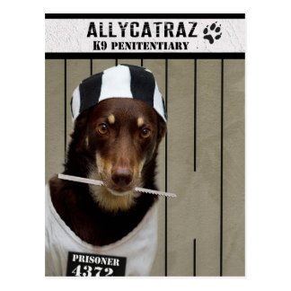 Escape from Allycatraz Postcard