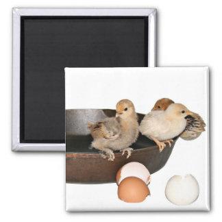 escaped breakfast square magnet