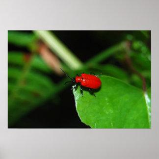 Escarabajo color rojo alegre en la hoja verde impresiones