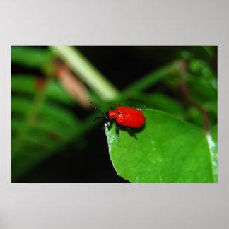 Escarabajo rojo fuerte sobre las hojas verdes posters