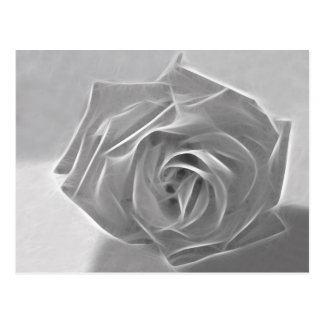 Essence of a Rose 3 Postcard