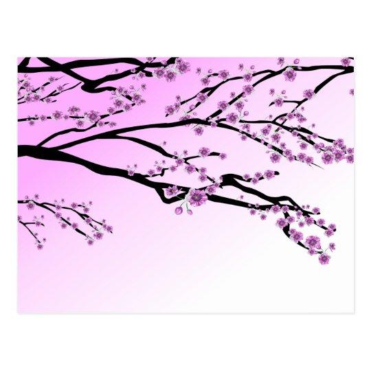 Essential Oils Cherry Blossom Tree Postcard