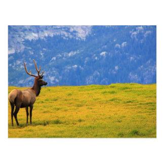 Estes Park Colorado Postcard