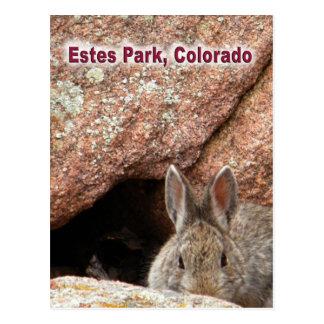 Estes Park Wilderness Postcard