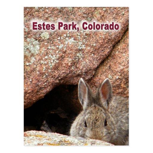 Estes Park Wilderness Post Card