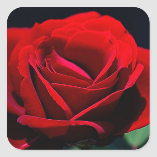 Eternal love Rose Square Sticker