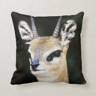 Ethiopia, Klipspringer looking away Cushion