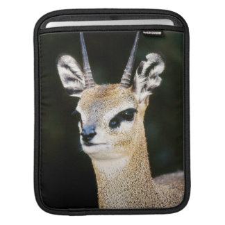 Ethiopia, Klipspringer looking away Sleeves For iPads