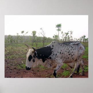 Ethiopian Brahman Cow Print