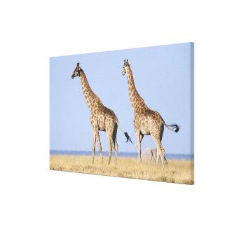 Etosha National Park, Namibia 3 Canvas Print